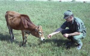 Da Nang: Capt. Bowler offers a Camel to a buffalo